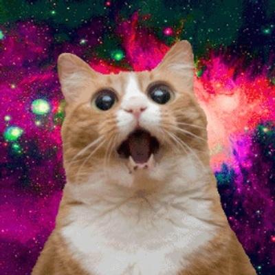 Фото с котами для авы в